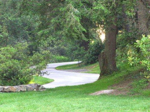 biltmore-estate-driveway